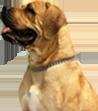 Personal Plan Dog