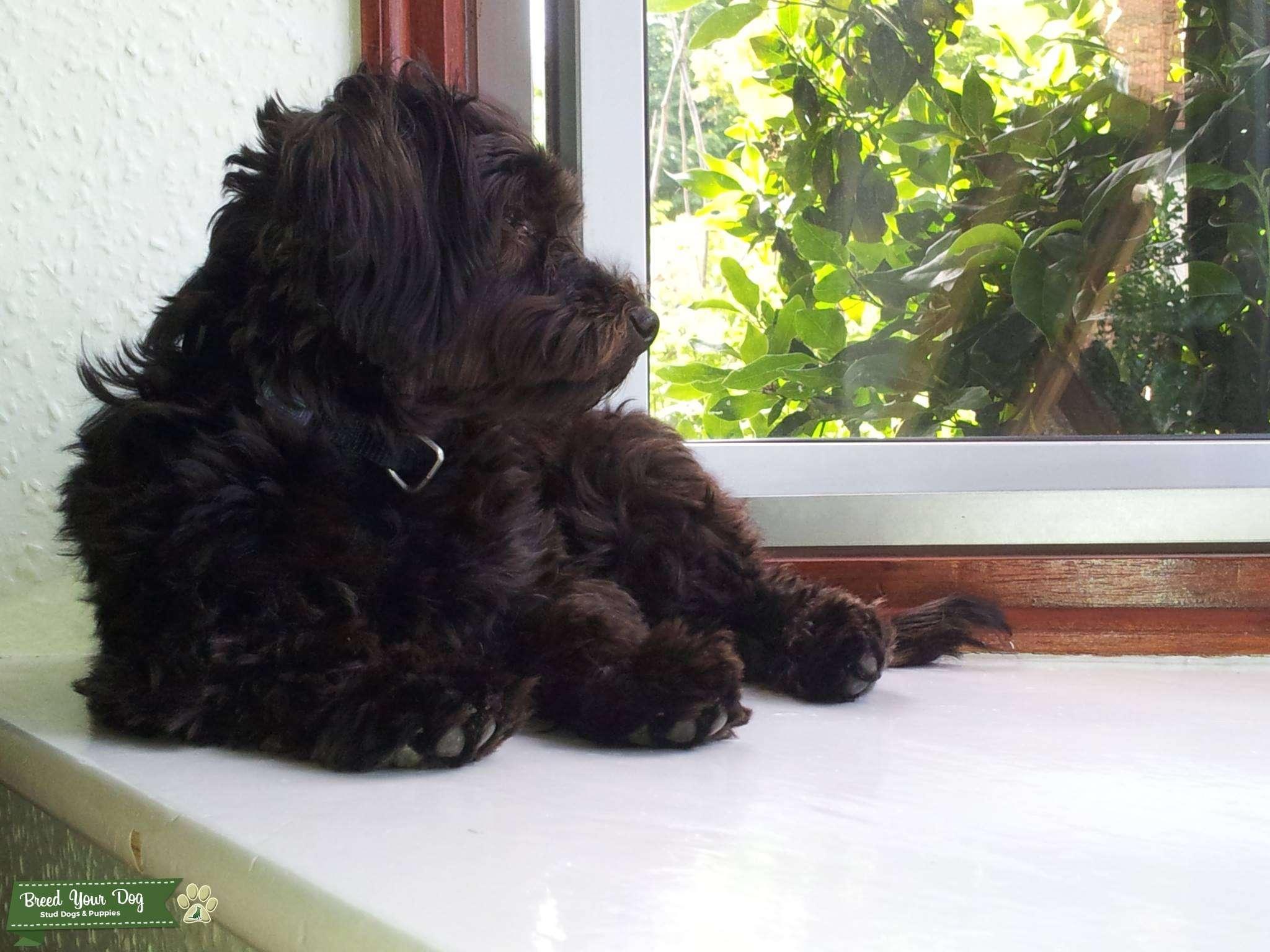 Image Result For Maltese Dog Breed