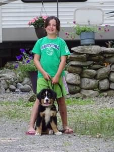 Bernese Mountain Dog Stud Listing Image Thumbnail