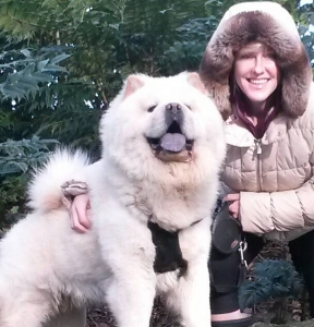white chowChow to stud out Listing Image
