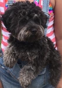 Male dog needs partner Listing Image