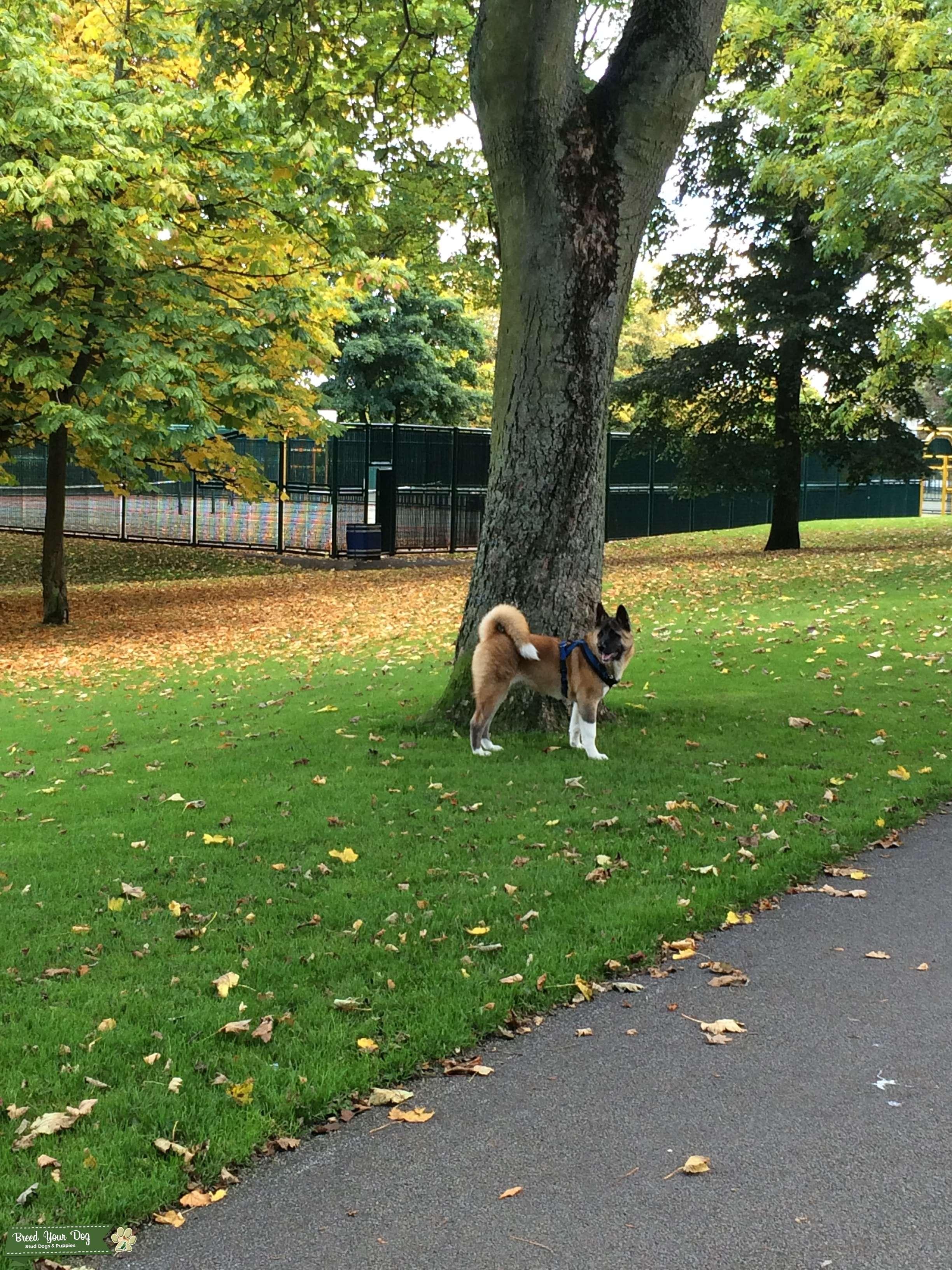 How To Make Your Dog Grow Big And Strong