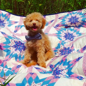 Apricot toy poodle! He has green eyes and a pink nose (5.8 lbs) He loves to cuddle and isn't a barker! Listing Image