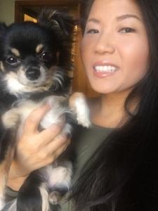 Cute Long Hair Chihuahua Stud Listing Image