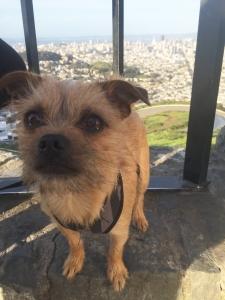 Mix: Pug/West Highland Terrier Listing Image