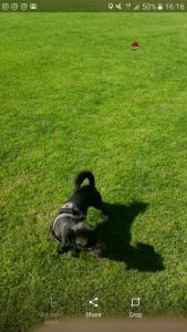 Patterdale Terrier  Listing Image Thumbnail