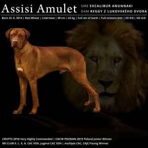 Rhodesian Ridgeback Livernose Stud Dog Listing Image