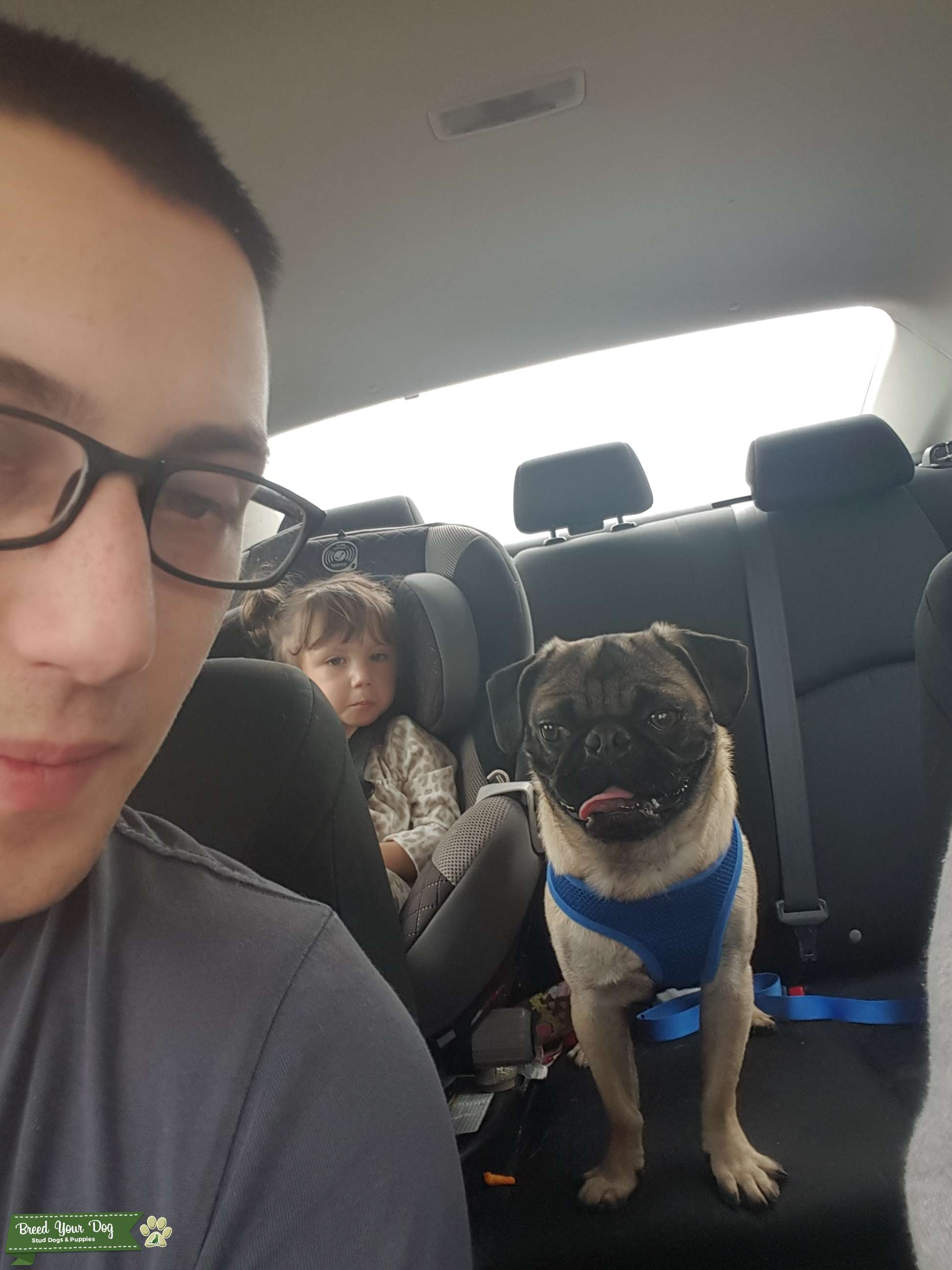 Pug dating site