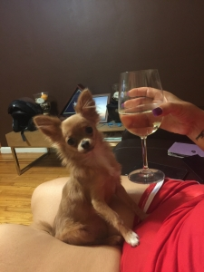 Long Haired Chihuahua well behaved Listing Image