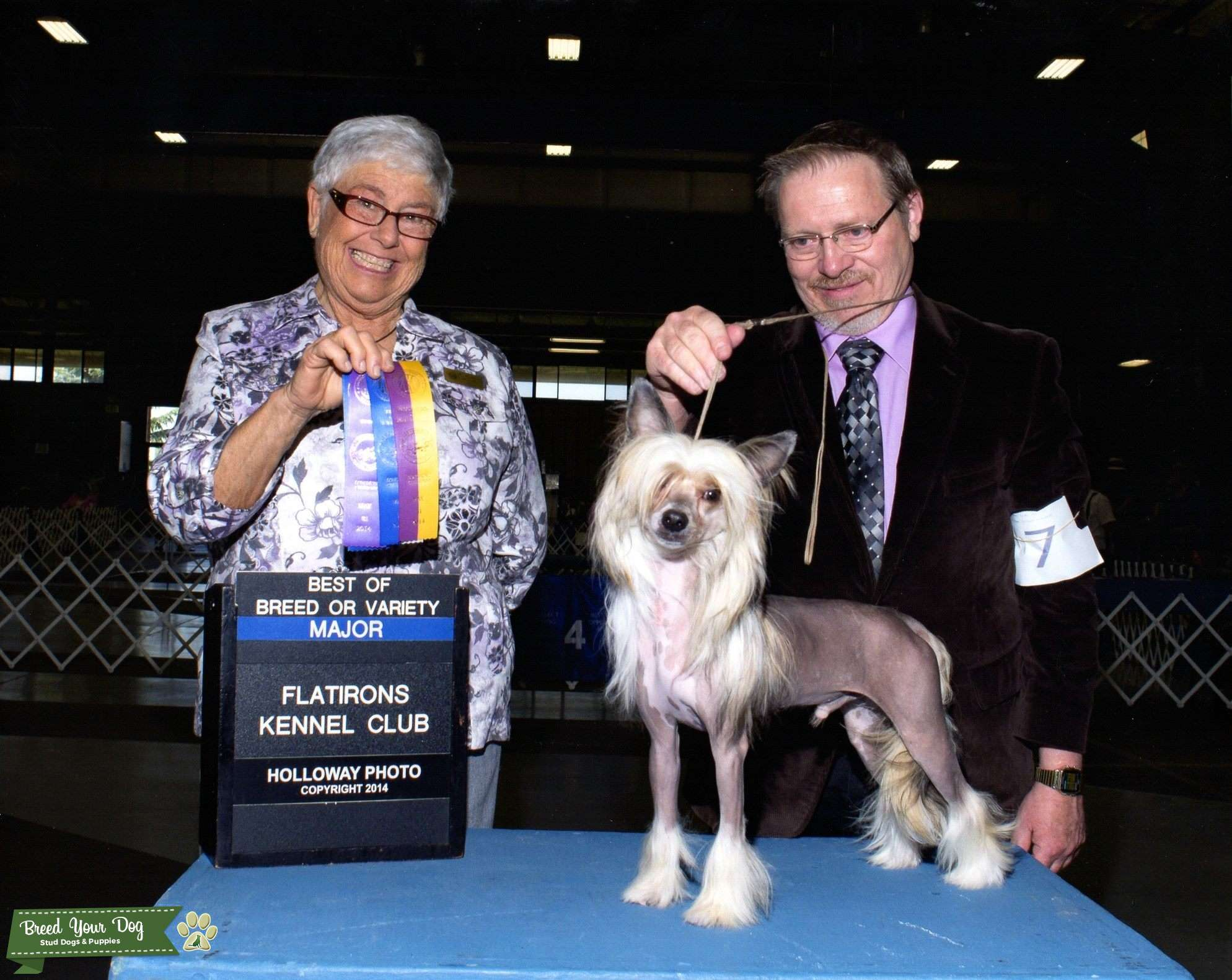 CGC CH Chinese Crested champion Listing Image Big