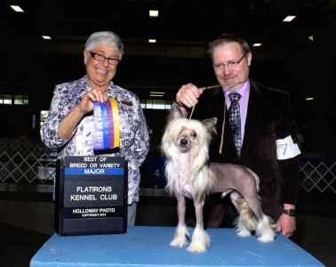 CGC CH Chinese Crested champion Listing Image