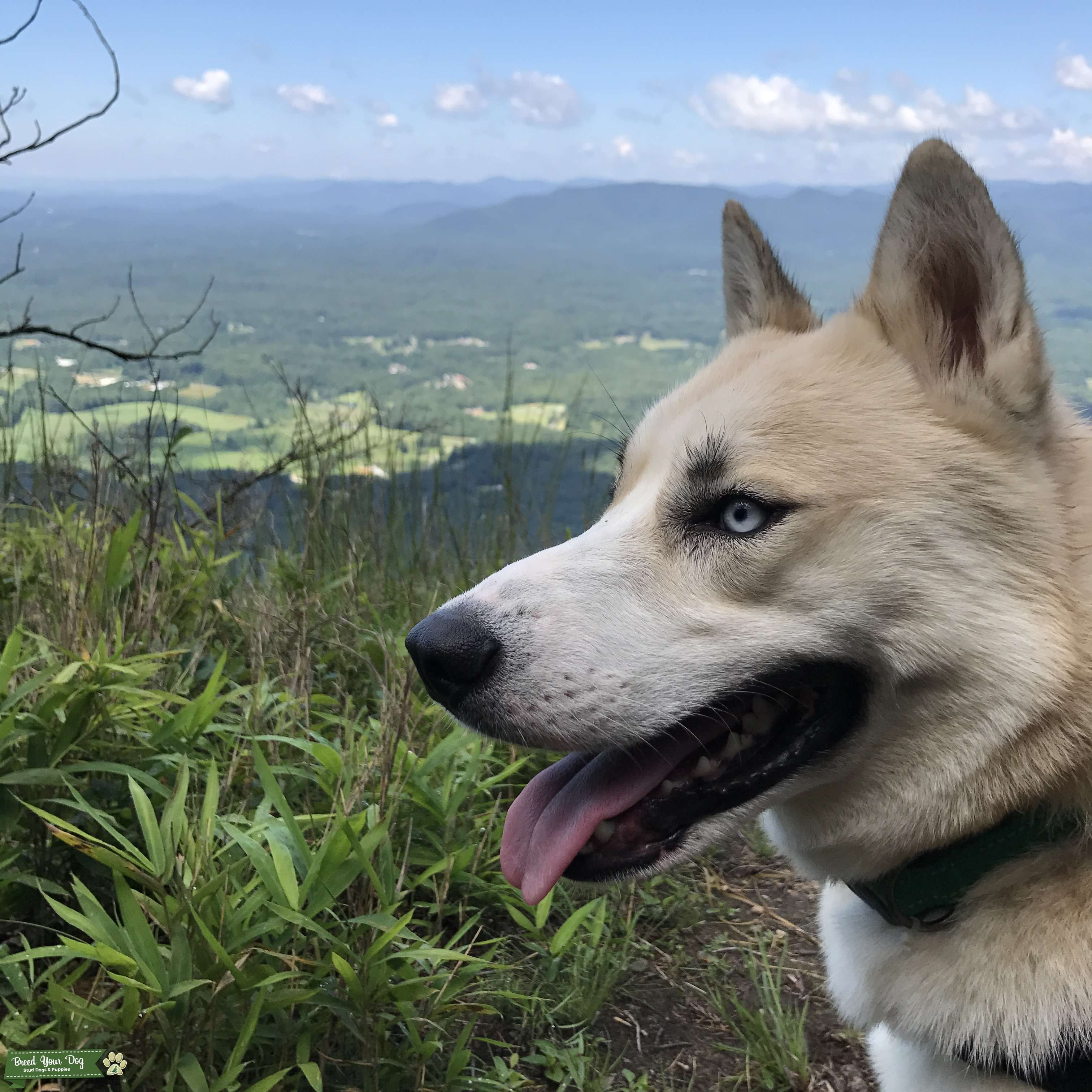 Husky Listing Image Big