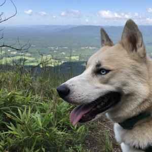 Husky Listing Image
