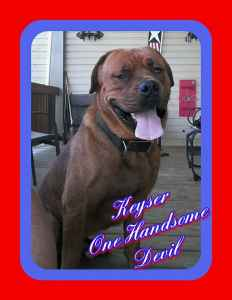 English/French Mastiff mix Stud Listing Image