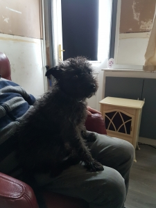 Patterdale terrier  Listing Image Thumbnail