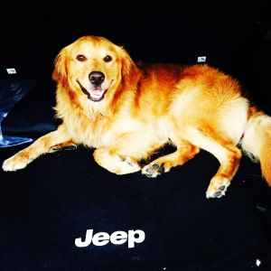 Male Golden Retriever For Breeding Listing Image