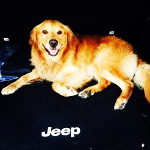 Male Golden Retriever For Breeding Listing Image Thumbnail