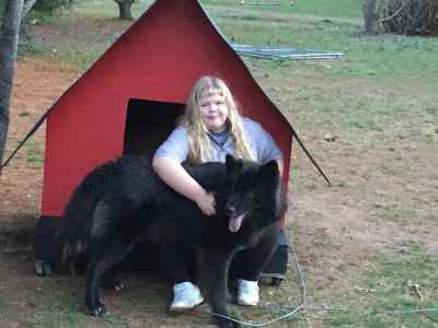 Wolfdog Listing Image