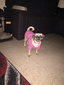 Foreign Coat Puggle  Listing Image