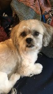 Handsome Teddybear seeking mate❤️ Listing Image