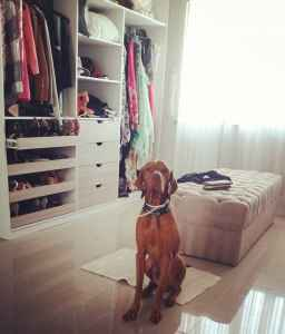 Male vizsla looking for a bitch to breed Listing Image