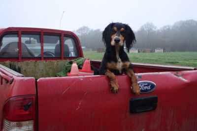 Beautiful tri colour dog Listing Image