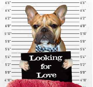 Looking for Love Listing Image
