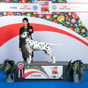 Dalmatian Stud Listing Image