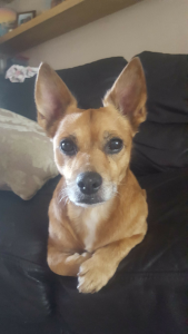 Dog looking for female  Listing Image