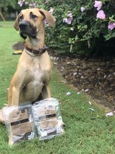 Great Dane Stud Dog  Listing Image