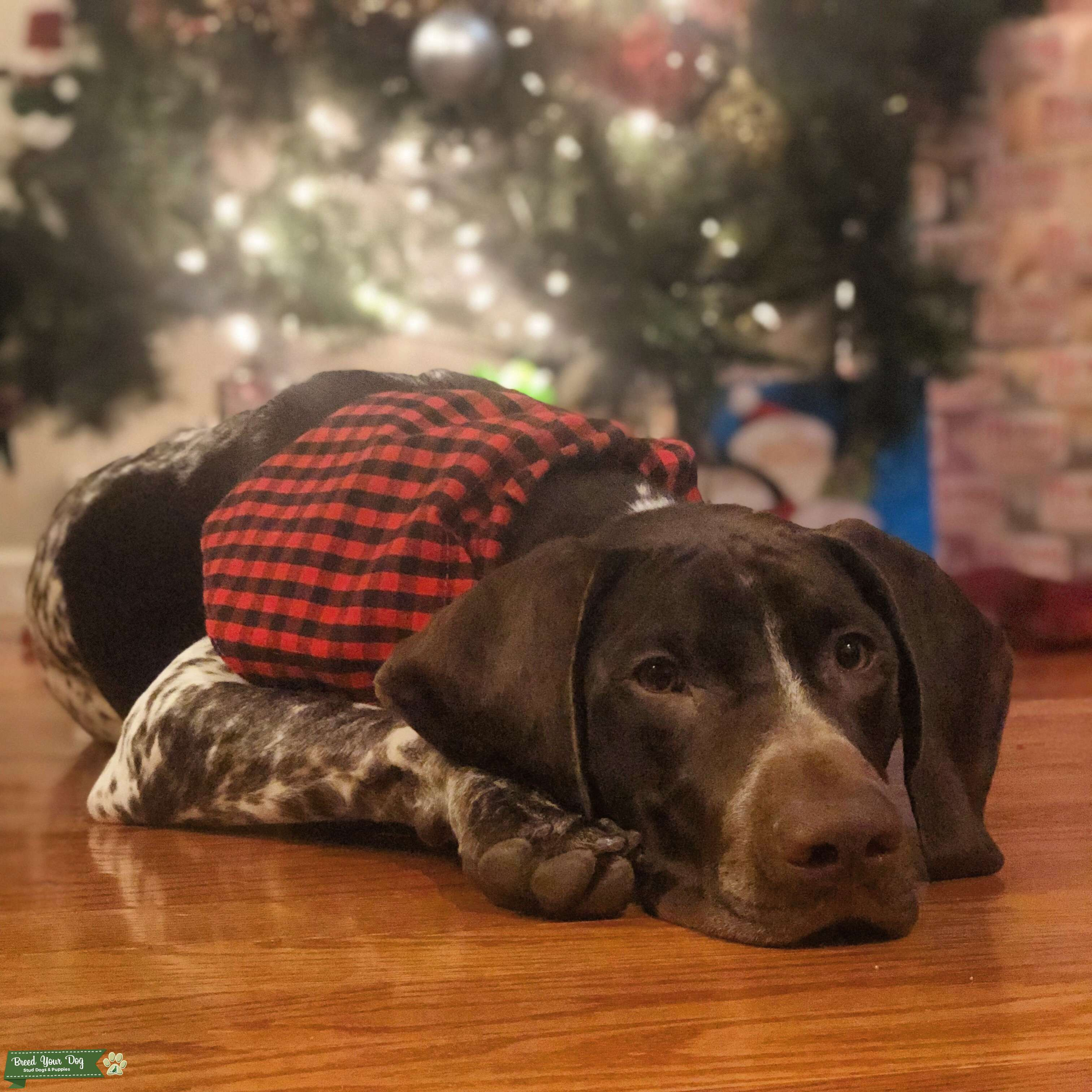 Archer The GSP from PA Listing Image Big