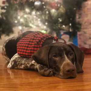 Archer The GSP from PA Listing Image