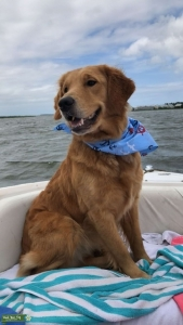 Golden girl looking for her first mate Listing Image