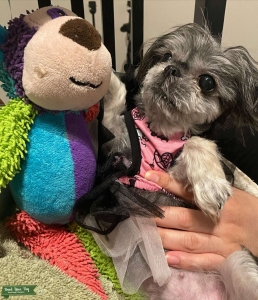 Male dog wanted for pups Listing Image