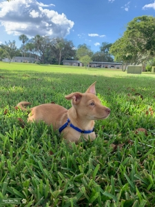Looking to Breed Only 1 Time Listing Image
