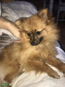 Looking for male pom stud Listing Image