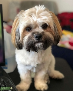Puppy Gatsby Single and Ready to Mingle! Listing Image