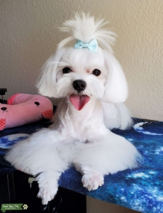 I'M LOOKING FOR A MALTESE GIRLFRIEND Listing Image