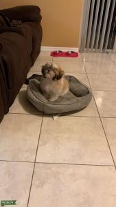 Playful Dog Listing Image