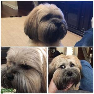 Dog Stud Listing Image