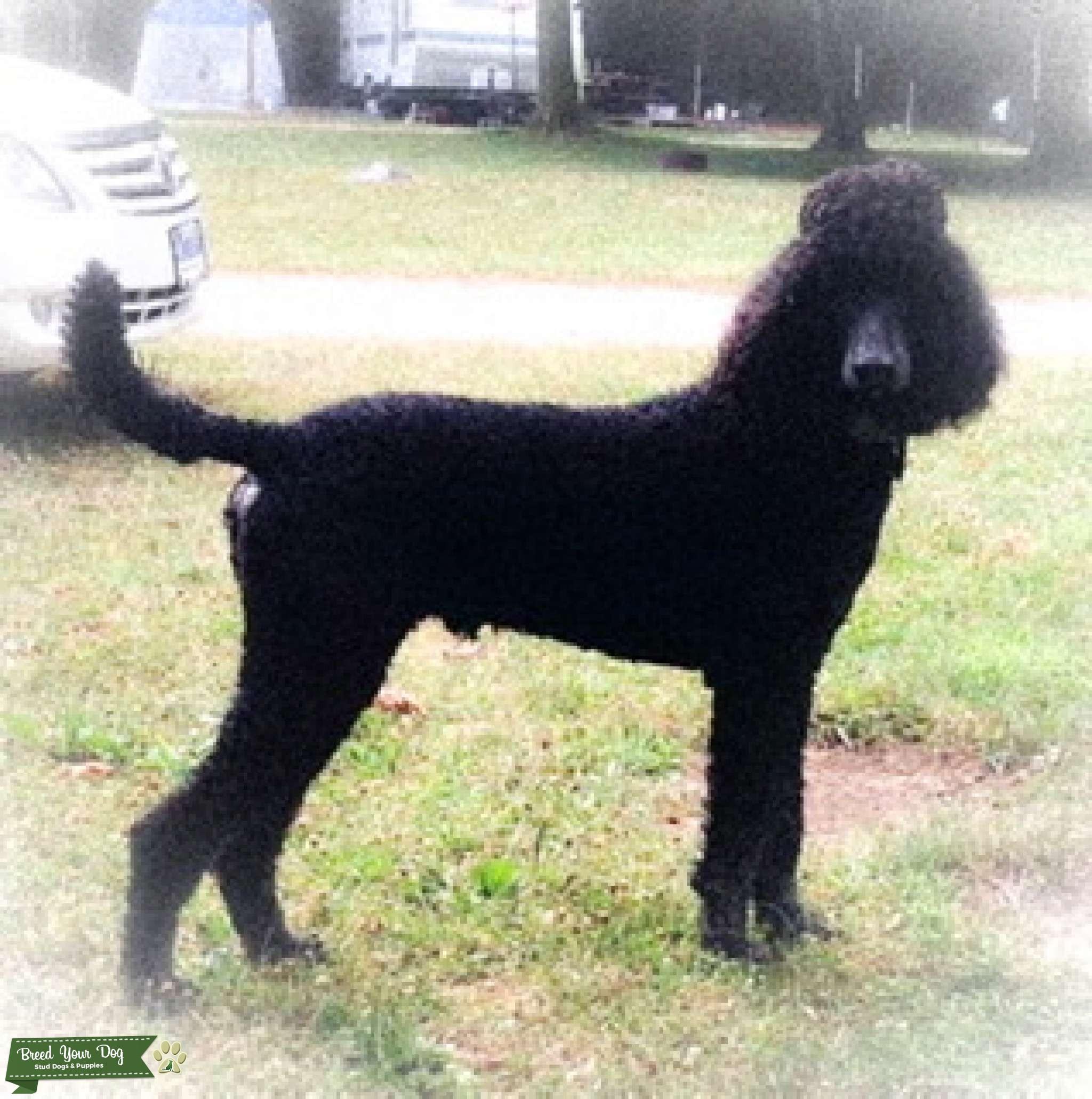 Smoky's Dog Stud Service Listing Image Big