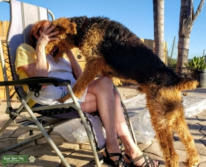 Airedale Terrier - Larger Oorang Listing Image