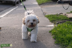 Seeking Hypoallergenic Female for puppies Listing Image