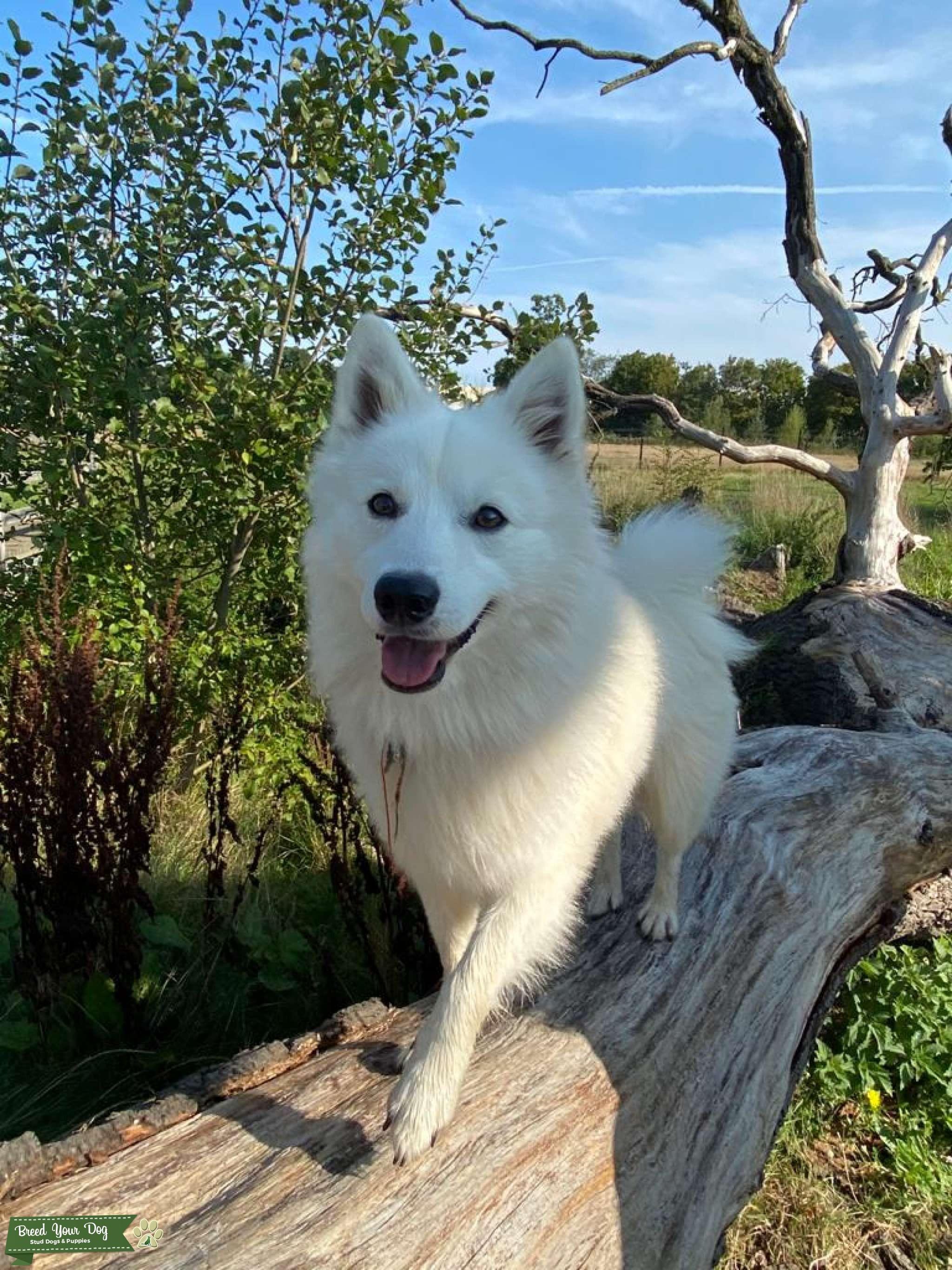 Stud dog Listing Image Big