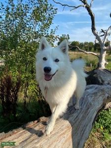 Stud dog Listing Image Thumbnail