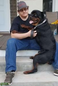 AKC registered Rottweiler stud Listing Image