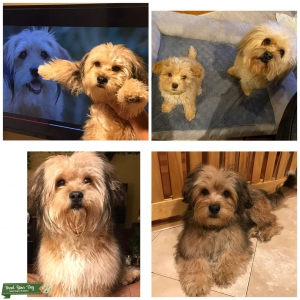 Beautiful Puppies  Listing Image