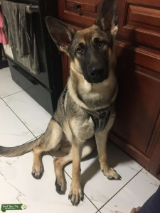 Looking for a GSD STUD Listing Image
