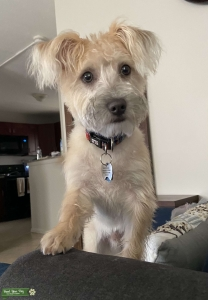 Looking For a Female Pup Listing Image