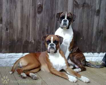 Flashy Red Boxer Listing Image